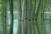 Trees with standing water